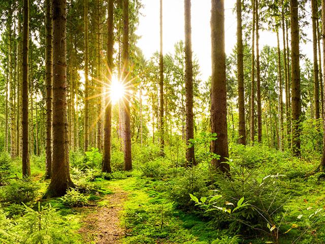 Naturbelassene Waldlandschaft